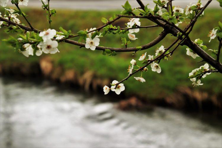 wiosna na przystani